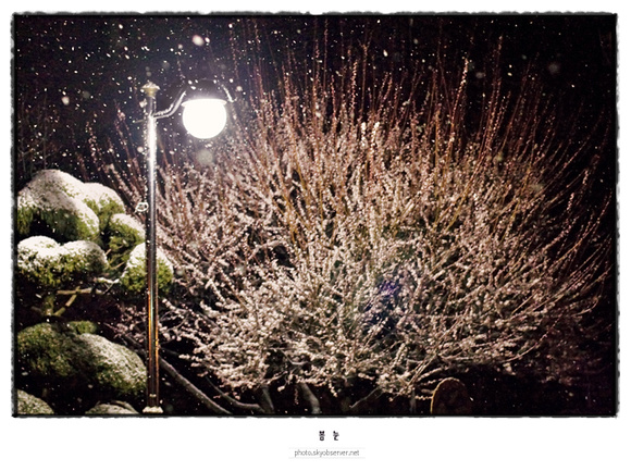 Youngwoo Cho Photography: earthblog_planetearth &emdash; Snow falling on cherry blossom